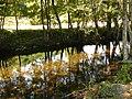 Riu de Baralla.jpg