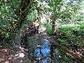 River Ching footpath 12, river bank trees, South Chingford, London, England.jpg