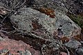 Rocks and Lichen (26609919931).jpg
