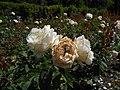 Rosa Chopin 2018-07-16 6261.jpg