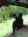 Rose Garden Scene - Chandigarh U.T. - India - 01 (26412164402).jpg