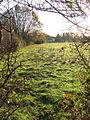 Rosemary's Meadow - geograph.org.uk - 1614954.jpg