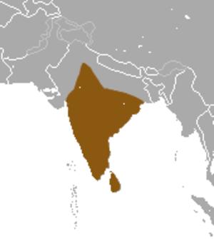 Ruddy mongoose - Image: Ruddy Mongoos area
