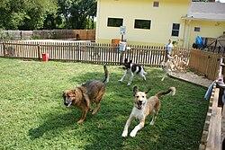 Dogs Day Inn Midlothian