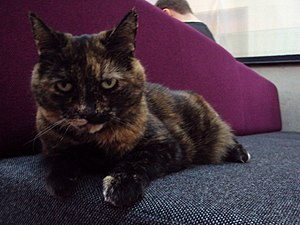 University of Southampton Students' Union - SUSU the Cat, the Union's pet and mascot.