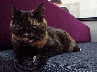University of Southampton Students' Union - SUSU the Cat, the Union's pet and mascot.