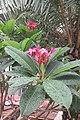 SZ 深圳 Shenzhen 南山 Nanshan 蛇口海上世界 Shekou Sea World 南海會 Nanhai Club garden plants n trees July 2017 IX1 (3).jpg