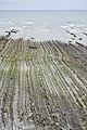 Sakoneta flysch coastline near Deba 2018-07 --009.jpg