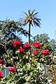 Santa Clara, CA USA - Santa Clara University - panoramio (15).jpg