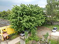 SantoTomas,Batangasjf0559 03.JPG