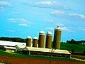 Schumacher Dairy Farm - panoramio.jpg
