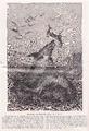 Schwertfisch, unter Thunfischen wütend.png