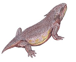 illustration av Sclerosaurus