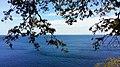 Sea And Tree.jpg