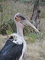 Serengeti 3 (14720519313).jpg