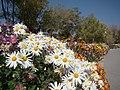 Shahgoli garden.jpg