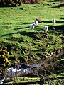 Sheep at the foot of Lake Down - geograph.org.uk - 317884.jpg