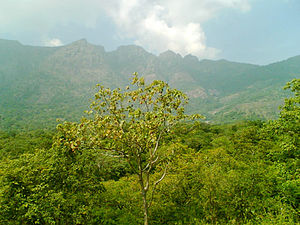 Srivilliputhur - Shenbagathoppu's calm and serene forest