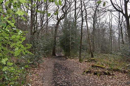 Sherrardspark Wood 5