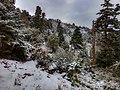 Sierra de las nieves nevada.jpg