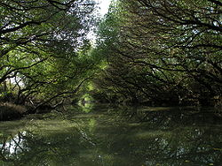 Sihcao Green Tunnel of Mangroves.JPG
