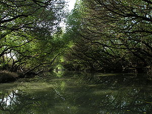 Sihcao Green Tunnel of Mangroves