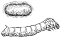 Silkworm (PSF).png