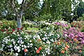 Silver Birch and Rose Beds at Gardens of the Rose, RNRS.JPG