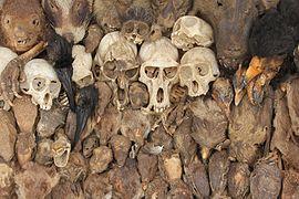 Skulls at Akodessawa Fetish Market 2016