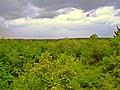 Skyline der Erkenschwicker Haard - panoramio.jpg