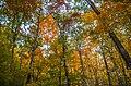 Sleeping Giant State Park - 22497540692.jpg