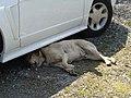 Sleeping dog 016.jpg