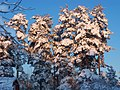 Snö i Säffle.JPG
