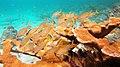 Snorkeling Bari Reef, Bonaire (12840816225).jpg