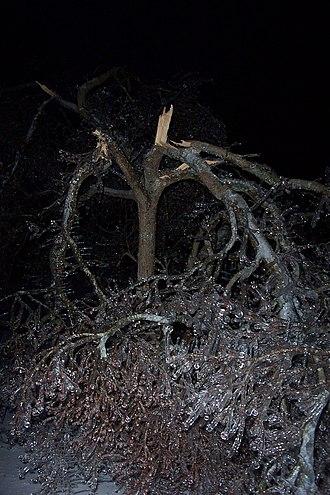 January 2009 North American ice storm - Image: Split up