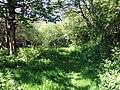 Spring greens - geograph.org.uk - 421567.jpg