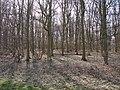 Spring sunshine in the trees - geograph.org.uk - 1204865.jpg