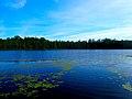 Spruce Lake - panoramio (3).jpg
