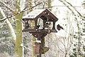 Squabbling starlings - geograph.org.uk - 1653397.jpg