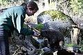 Staff member of Northwest Trek feeding porcupine. (21bd169f45a64b99b5230549f7590580).jpg