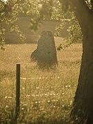 Standing Stone at Ekornavallen.jpg