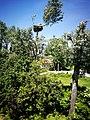Stork nest.jpg
