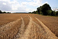 Stubble field near Colchester Green - geograph.org.uk - 1478051.jpg