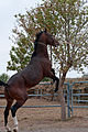 Studfarm in Turkmenistan - Flickr - Kerri-Jo (22).jpg