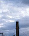 Swifts Entering Agate Hall Chimney-2.jpg