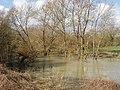 Swollen River Cherwell - geograph.org.uk - 352487.jpg