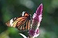TANAKA Juuyoh - Orange Tiger (by).jpg