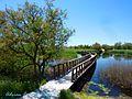 Tablas de Daimiel - Wetland Boardwalk in Beautiful Weather - panoramio.jpg