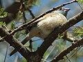 Tanzania 0441 cropped Nevit.jpg