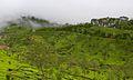 Tea estates of Munnar.jpg